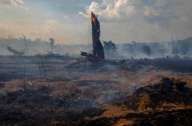 Partes desmatadas da Amazônia 'emitem mais CO2 do que absorvem'