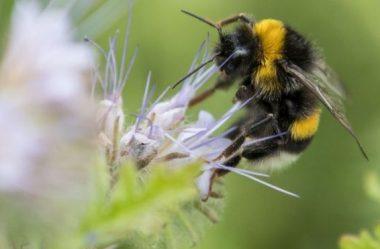 Mudança climática: perda de abelhas causada pelo 'caos climático'