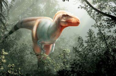 Espécie de tiranossauro chamada 'Ceifeira da Morte' encontrada no Canadá