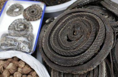 """Coronavírus: proibição de comércio de animais silvestres na China """"deve ser permanente"""""""