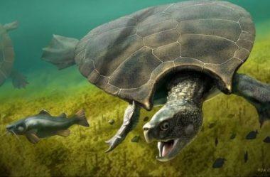 Descobertos fósseis de tartarugas do tamanho de carros