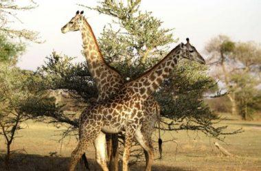 Mudança climática: ameaça verde para áreas selvagens