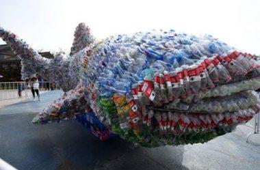 Plástico: como prever ameaças a animais em oceanos e rios